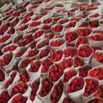 красные тюльпаны в упак